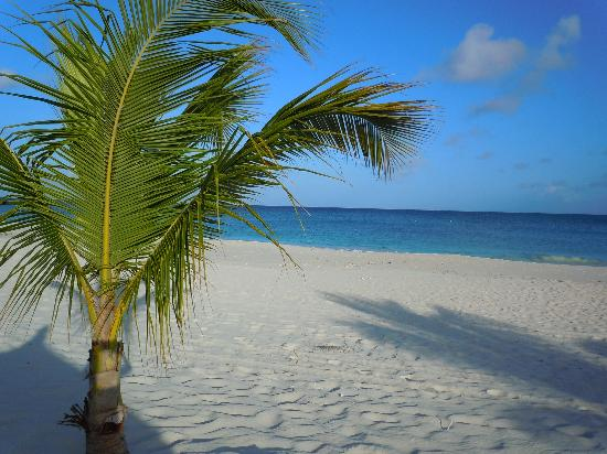 Palm - Eagle Beach, Aruba: View from my tiki hut