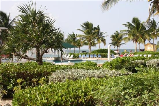 The Blue Iguana Grill: Veiw of resort off patio