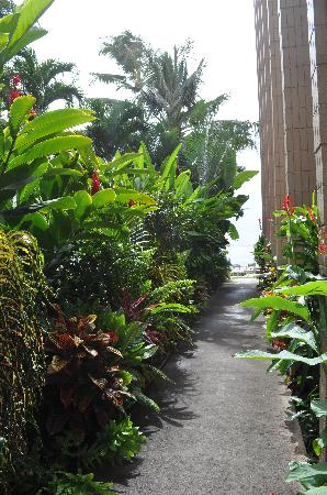 Kaleialoha Condominiums: Plantings at side of building