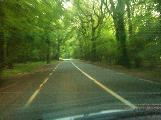 SheenView B&B: Drive to Sheenview - Gorgeous!