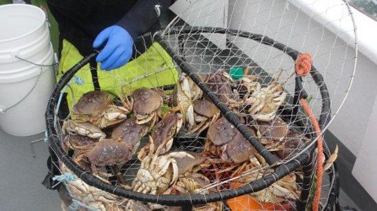 Captain s reel deep sea fishing newport or top tips for Newport oregon fishing charters