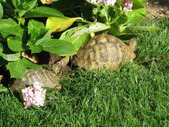 Sandra B&B: in compagnia di tartarughe nel giardinetto del B&B
