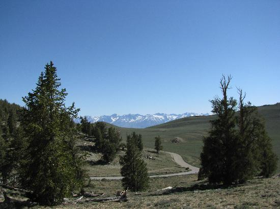 Ancient Bristlecone Pine Forest: Schulman Grove Looking Southwest