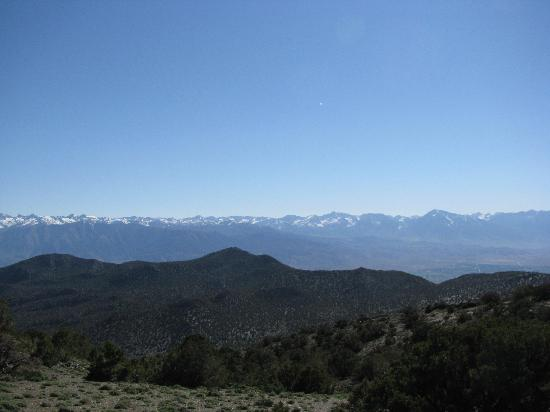 Ancient Bristlecone Pine Forest: Sierra Viewpoint