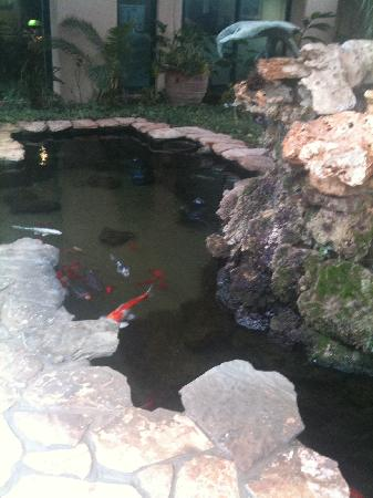 Carmel Forest Spa Resort by Isrotel Exclusive Collection: a koya fish pond inside the hotel