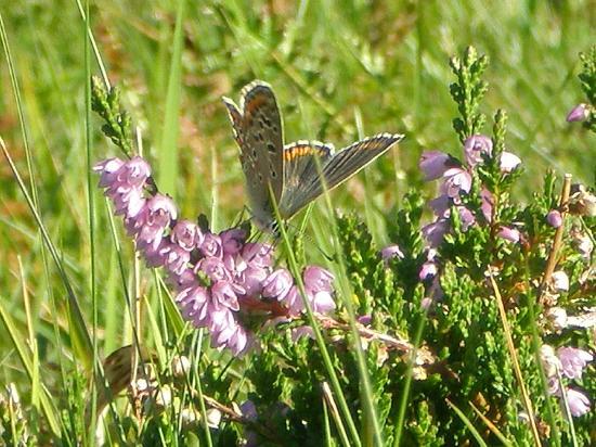 Al Sole Hotel Club Residence: butterfly