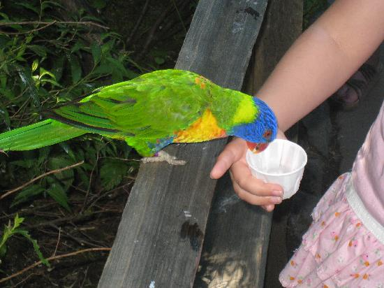 Oregon Zoo: Beautiful birds