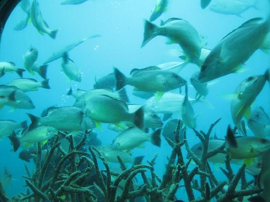 フィッシュアイマリンパーク海中展望塔, お魚