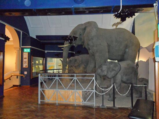 The National Museum : Elephant models