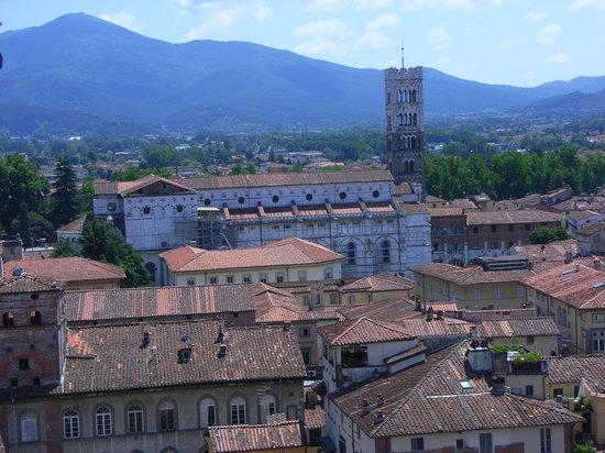 Guinigi Tower: Blick von oben auf den Dom von Lucca