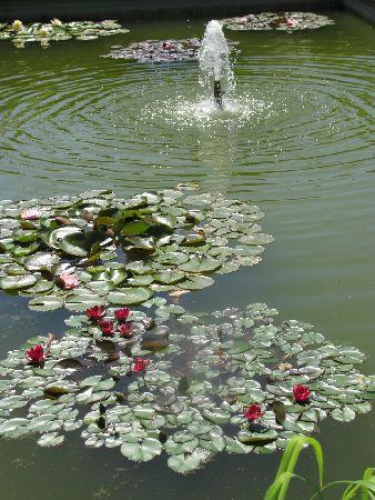 Oranien Park: pond with small fountain