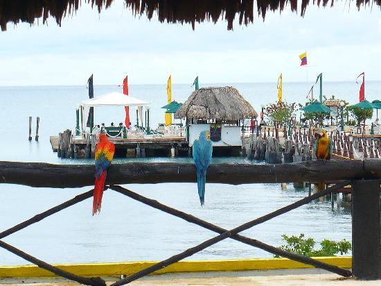 Decameron Isla Palma: Terraza Comun