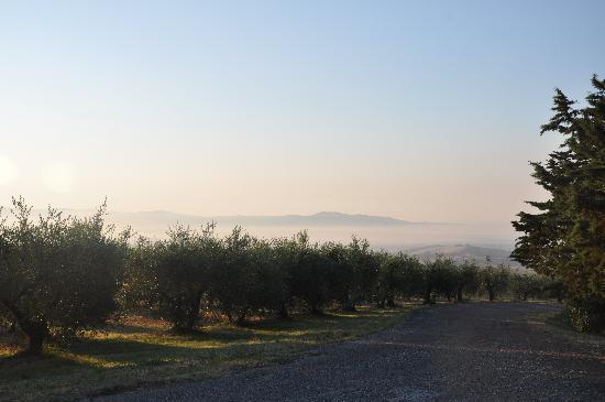Piancastagnaio, Italia: Ulivi all'alba, ingresso ai Cascetti