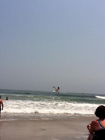 Beach Hugger Motel : North Wildwood Beach