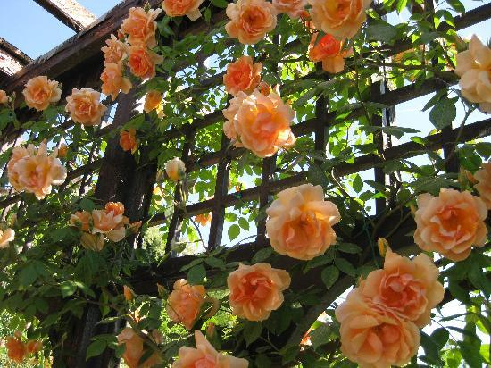 B&B Le Magnolie: le rose