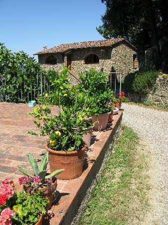 Poggio all'Olmo: View of panoramic terrace and apartments