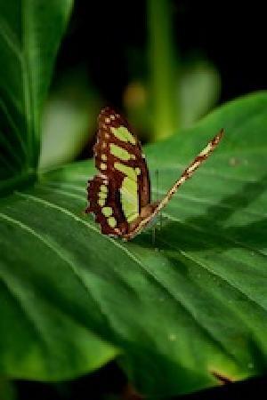 Samasati Retreat & Rainforest Sanctuary: Butterfly in the garden