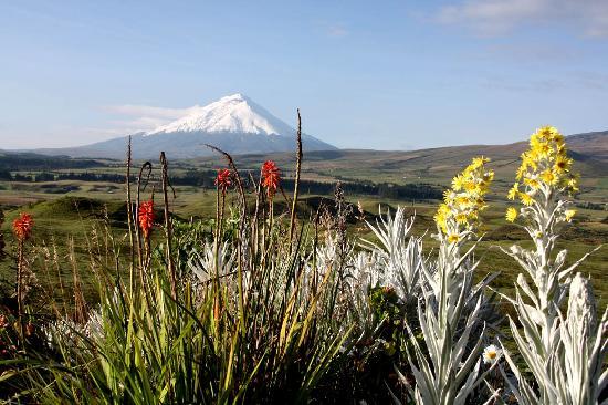 The Secret Garden Cotopaxi: Uitzicht