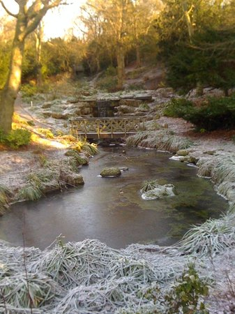 Gateshead, UK: frost in the dene.