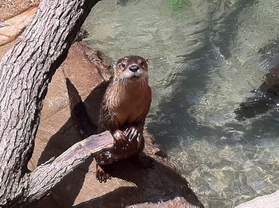 Tulsa Zoo: I'm so cute:)