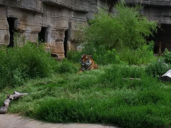 Tulsa Zoo: who you looking at?