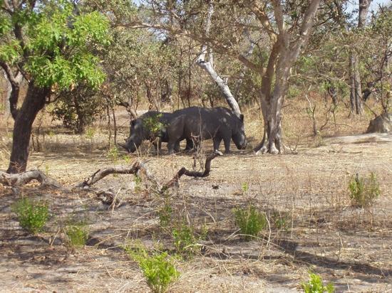 Bakotu Hotel: rhino