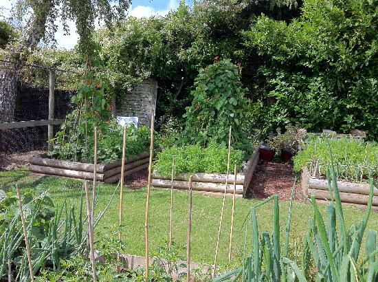 The Taverners: Garden