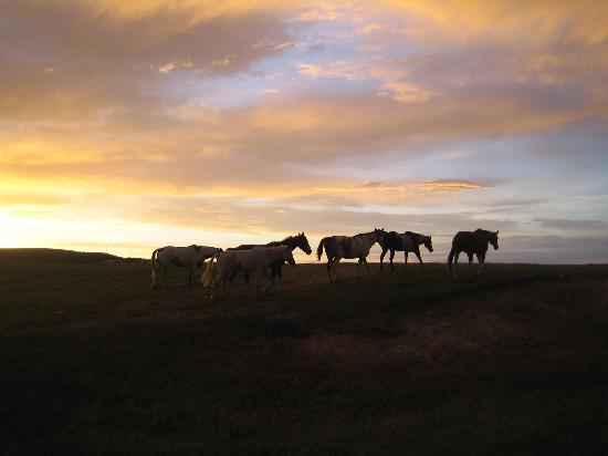 Deer Forks Ranch: Horses roaming the grounds