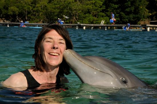 Barefoot Cay Resort: Dolphin Encounter