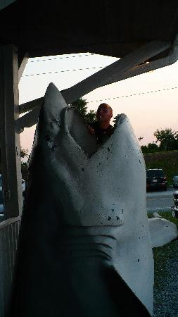 Sharky's: beware of sharks