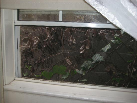 Old Yacht Club Inn Vacation Rentals: The view from our window. A cement wall with dead vines and a home for noisy birds