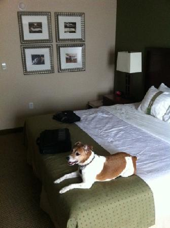 Holiday Inn Richmond South-Bells Road: pet friendly!!!