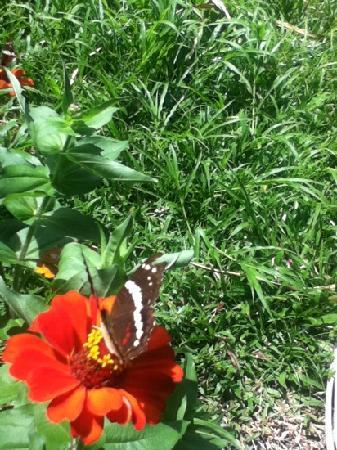 Center for Tropical Agricultural Research and Education (CATIE): butterfly