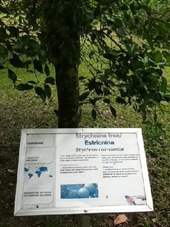 Center for Tropical Agricultural Research and Education (CATIE): strychnine tree