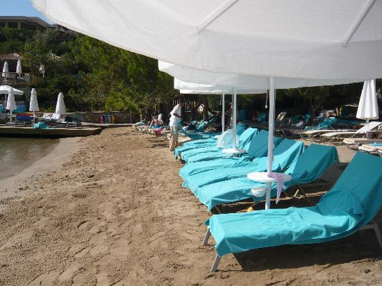 Hilton Bodrum Turkbuku Resort & Spa: Sun beds are reserved for VIP customers