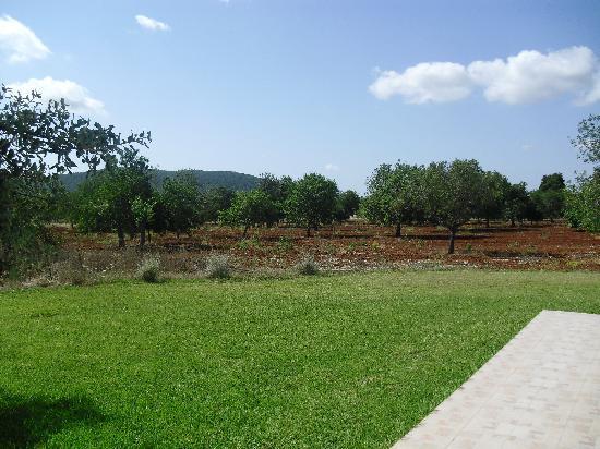 Sa Vinya D'En Palerm: vista general desde el agroturismo