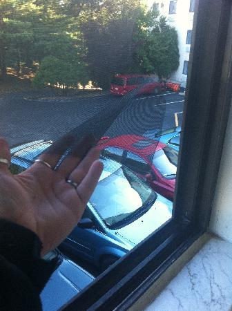 Motel 6 Westborough : ripped out screen and easy access from outside