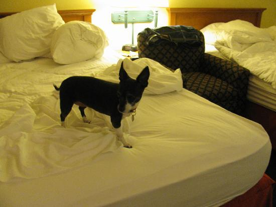 Quality Inn & Suites : Our Dog Ready For Bed