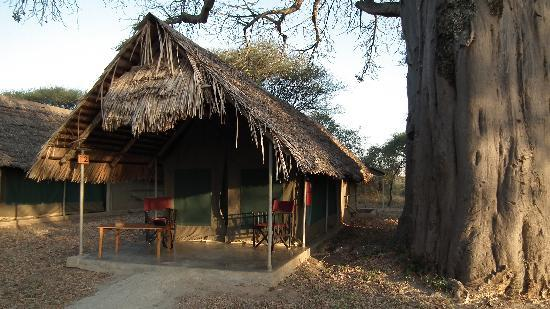 Tarangire Safari Lodge: The clean and tidy tents