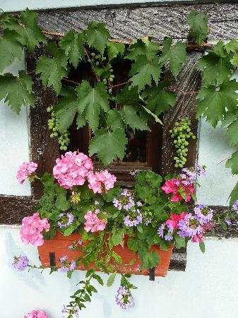 Hotel Kieffer vigne et fleurs