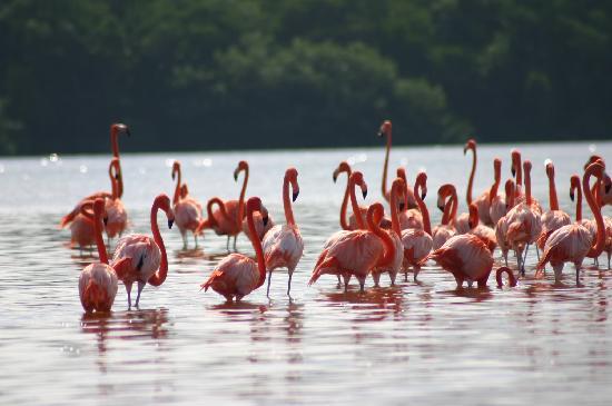 Hotel Manglares : Parque natural del Flamenco