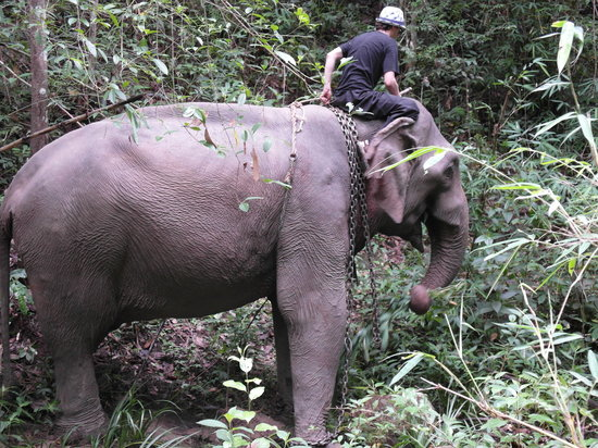 Elephant Special Tours : Elefanten wollen ständig fressen!