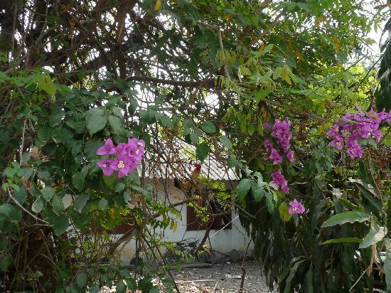 Ban Rai Tin Thai Ngarm Eco Lodge: On my walk to a nearby temple - do you see something hiding??