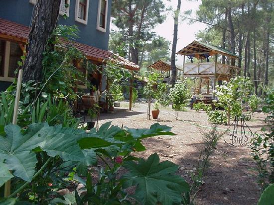 Olimpos Daphne Tatil Evi: Garten und Wald Daphne House