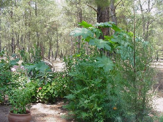 Daphne House Garten und Wald