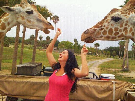 Serengeti Night Safari at Busch Gardens: Giraffe feeding