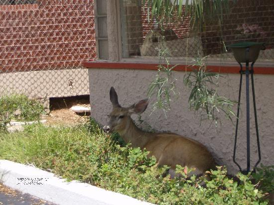 Dillon Motel: Even the Deer feel at home herre!!!!