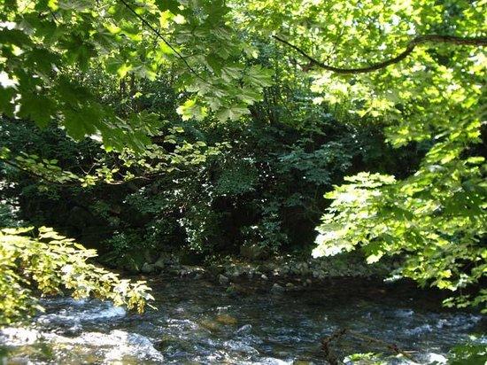 Camping Parc de la Fecht : Environnement