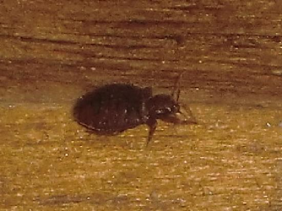Tucson Movie Theater Bed Bugs