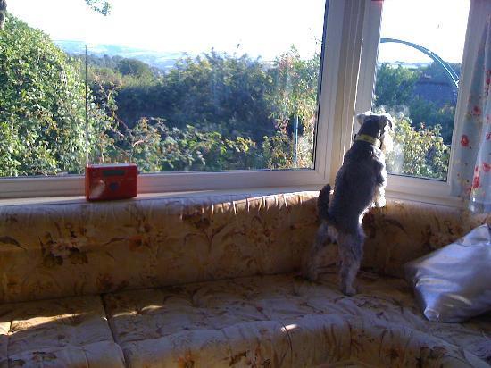 Nantgwynfaen Organic Farm: BAD dog!